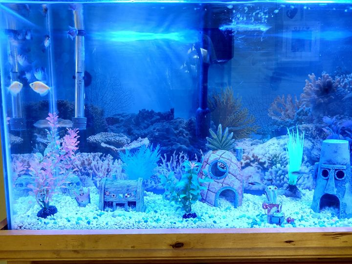 Thanks to Terry and Sandy Brown for our new fish and decorations for our aquarium.